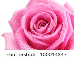 Beautiful Pink Rose With Drops...
