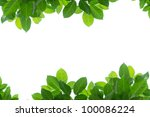 Green leaf isolated background - stock photo