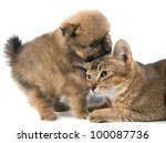 Cat and puppy in studio on a neutral background - stock photo