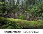 tropical mountain forest | Shutterstock . vector #100279163