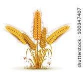 wheat sheaf arrangement | Shutterstock . vector #100347407