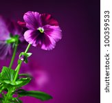 Purple Pansy Flowers Border ...