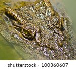 crocodile gazing through swamp water - stock photo