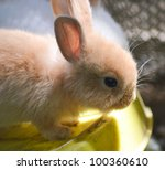 pink baby rabbit feeding - stock photo