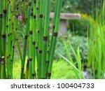 horsetail rush   Shutterstock . vector #100404733