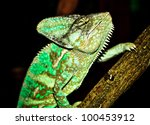 chameleon climbing tree - stock photo