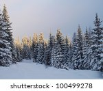 Spruces covered with snow - stock photo