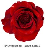Red Rose With Dew Isolation On...