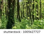 background of nature. sunny day ...   Shutterstock . vector #1005627727