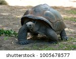 galapagos giant tortoise ... | Shutterstock . vector #1005678577