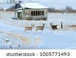 white tail deer at school   Shutterstock . vector #1005771493