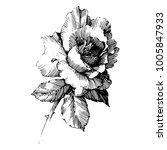 wild flowers roses isolated.... | Shutterstock .eps vector #1005847933