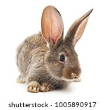 one small brown rabbit isolated ... | Shutterstock . vector #1005890917