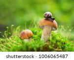 edible mushrooms in a forest on ...   Shutterstock . vector #1006065487