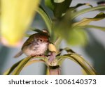 A Small Bird Hiding On A Leaf...