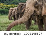 elephants in chiang mai.... | Shutterstock . vector #1006145527
