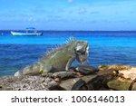 Green Tropical Iguana Sitting...