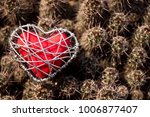 Small photo of The thorns of the heart. Love before valentine that heart and cactus