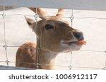 big brown deer in the farm  | Shutterstock . vector #1006912117