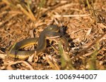 snake in forest  wild animals | Shutterstock . vector #1006944007