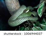 snake in forest  wild animals | Shutterstock . vector #1006944037