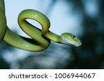 snake in forest  wild animals | Shutterstock . vector #1006944067