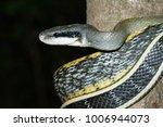 snake in forest  wild animals | Shutterstock . vector #1006944073