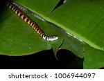 snake in forest  wild animals | Shutterstock . vector #1006944097