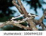 snake in forest  wild animals | Shutterstock . vector #1006944133