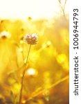spring meaodow wild flower in... | Shutterstock . vector #1006944793