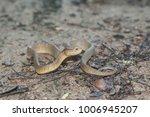 snake wild animals | Shutterstock . vector #1006945207