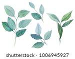 green leaves  eucalyptus... | Shutterstock . vector #1006945927