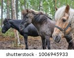 horses in a finland forest... | Shutterstock . vector #1006945933
