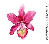 wildflower pink orchid flower... | Shutterstock . vector #1006960153