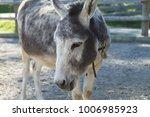 donkey on farm | Shutterstock . vector #1006985923