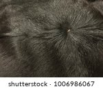 cowskin is used for animal... | Shutterstock . vector #1006986067