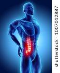 3d illustration of sacral spine ... | Shutterstock . vector #1007012887