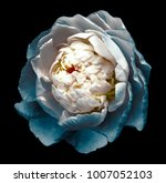 a bud of white turquoise... | Shutterstock . vector #1007052103
