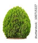Green Beautiful Bush Isolated...