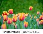 beautiful bouquet of tulips...