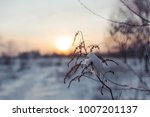 silhouette of a tree branch in... | Shutterstock . vector #1007201137
