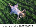 beautiful sexy girl relax on... | Shutterstock . vector #1007210527