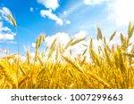 wheat field. ears of golden... | Shutterstock . vector #1007299663