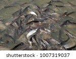 iridescent shark  striped... | Shutterstock . vector #1007319037