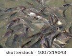 iridescent shark  striped... | Shutterstock . vector #1007319043
