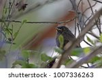 Small photo of young blackstart on branch