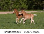 Nice little foals running on pasture - stock photo