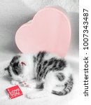Stock photo a cute little kitten sleeps on a white carpet on sun near sweets heart box with chocolate cute 1007343487