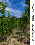 Small photo of Path in a middle of French wineyard in Rhone Vallee region. Summer season.