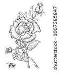 hand drawn rose vector  etch... | Shutterstock .eps vector #1007385847